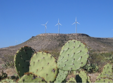 Kakteen und Windkraft in West-Texas